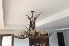 ciervo-colorado-radial1